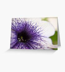 Purple-veined Petunia Greeting Card