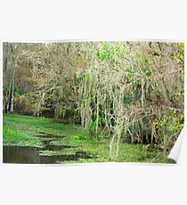 The Glades Swamp Poster