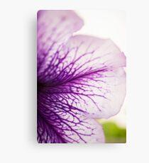 Purple-veined Petunia Petal Canvas Print