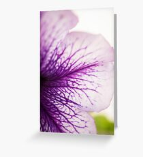 Purple-veined Petunia Petal Greeting Card