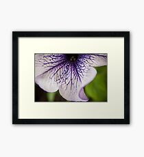 Bottom Purple-veined Petunia Petal Framed Print