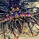 Lobster by Melissa Fiene