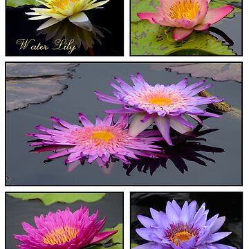 Water Lily Collage by ginawaltersdorf