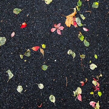 Autumn Leafs on Asphalt by fparisi753