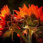 Red Sunflowers by LudaNayvelt