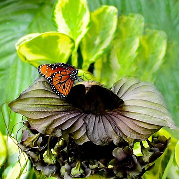 Tropical Black Flower Orange Butterfly by ginawaltersdorf