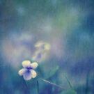 Wild Violet by Priska Wettstein