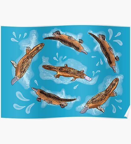Splashing Platypuses Poster