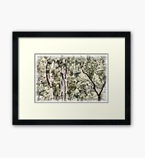Australian Bush Framed Print