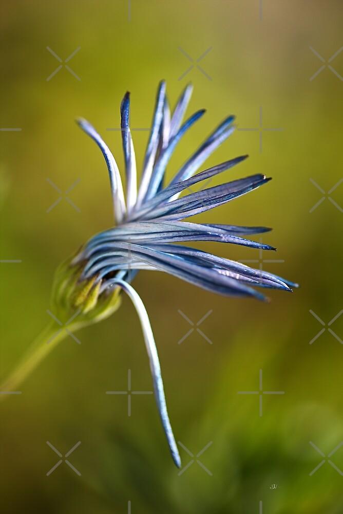 Dancing Daisy Flower by Joy Watson