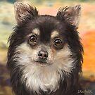 Cute Furry Brown and White Chihuahua on Orange Background by ibadishi