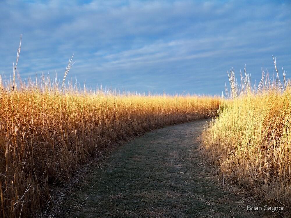 Path of Light by Brian Gaynor