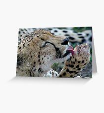 Grooming Cheetah Greeting Card