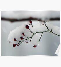 Winter Berrie Poster