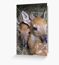 Our Sweet Little Faces Greeting Card