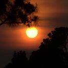 Florida Sunset by Donna Adamski