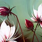 White Lotus Flowers by agatakobus