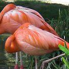 Flamingo by bogna777