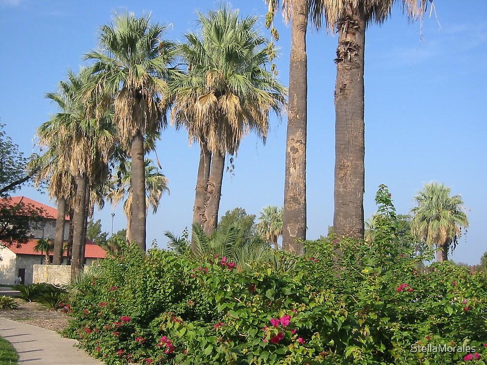 Palm Trees by the Swimming Pool, Woodlawn Lake & Park, San Antonio, Texas (City) by StellaMorales