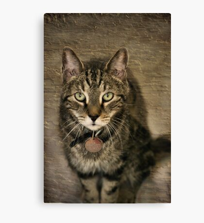 Give Me A Home Canvas Print