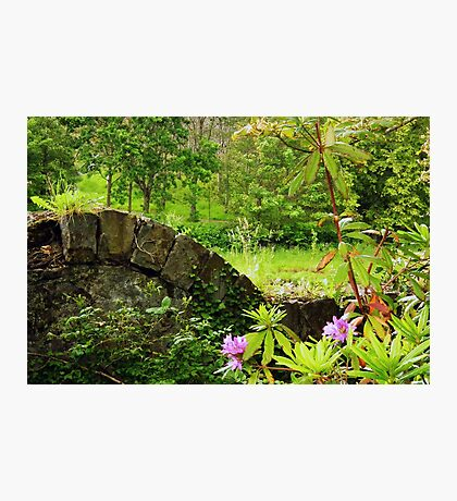 A green and pleasant place Photographic Print