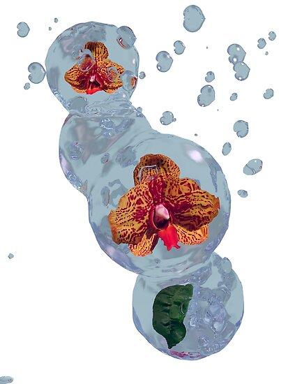 Wasser Orchidee von Stefanie Keller