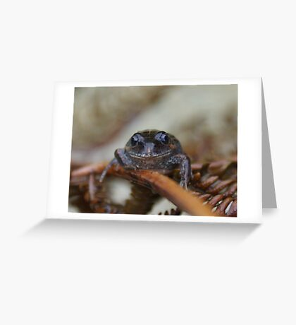 Little Froggy. Greeting Card