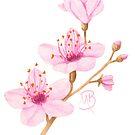 Cherry Blossom by MonicaBurnette