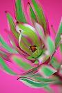 Striped Leucadendron by Renee Hubbard Fine Art Photography
