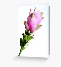 Cucurma Greeting Card