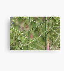 Asparagus  Canvas Print