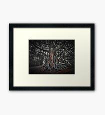 Banyan Trees Pt 1 Framed Print
