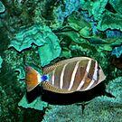 Tropical Fish by Savannah Gibbs