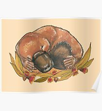 Sleepy platypus Poster