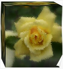 YELLOW ROSE IN A BOX Poster