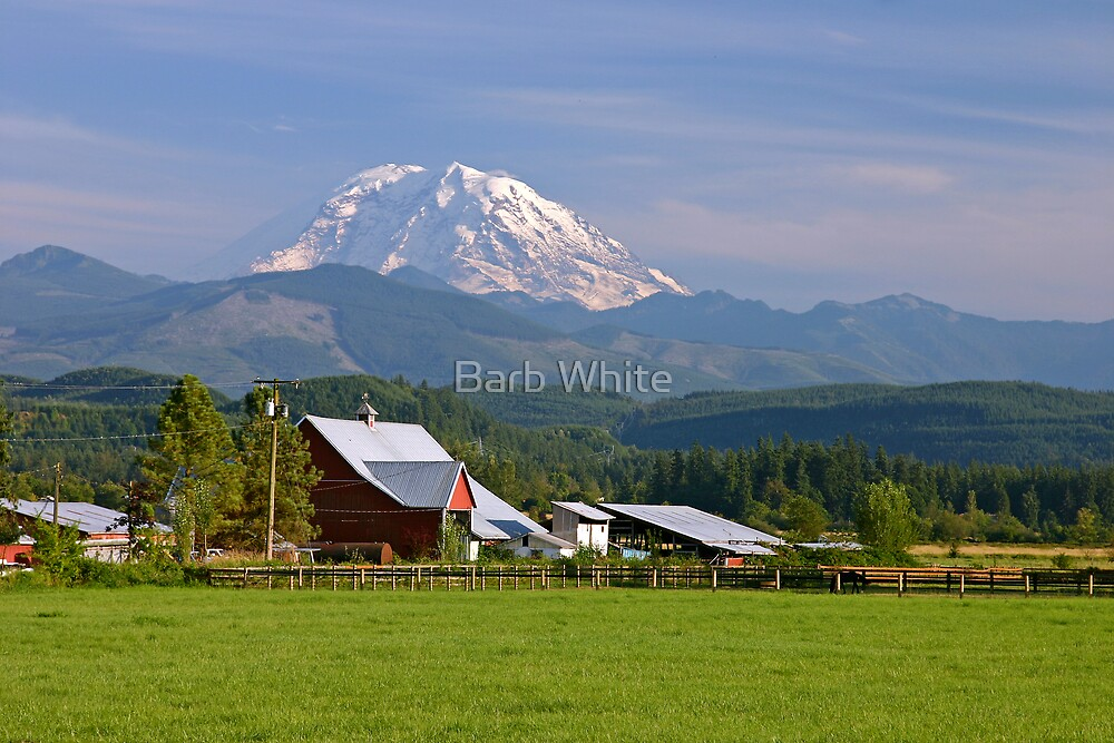 Mt. Rainier in the Backyard  by Barb White