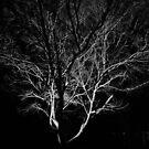 Light the Night by John Davies