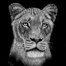 A Hunter's Stare by bellestone