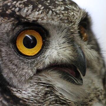 Owl  by derbyshireduck