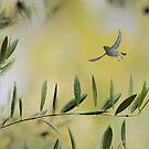 Olive tree and silvereye by nadine henley