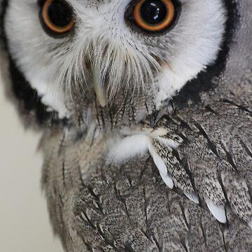cute owl by derbyshireduck