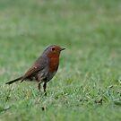 Robin by Mel Preston