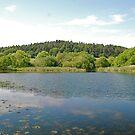 Margrove Park Wetlands by dougie1
