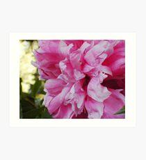 Sweet floral frills Art Print