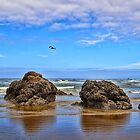 Cannon Beach by Lanis Rossi