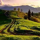 road through green hills at sunset by mike-pellinni