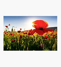 poppy flowers close up in the field Photographic Print