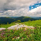 wild herbs among the rocks in summer mountains by mike-pellinni