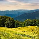 forest on a grassy meadow in mountains by mike-pellinni
