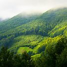 mountain forest in morning fog by mike-pellinni